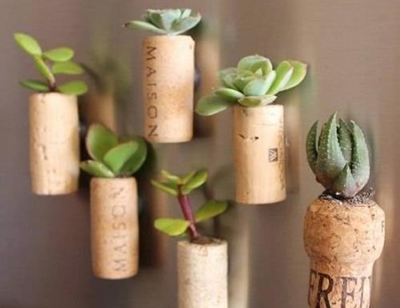 plantas em rolhas
