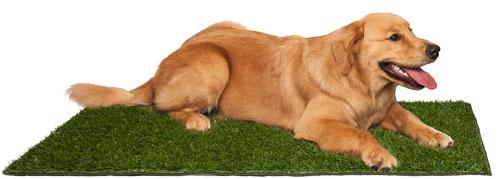 Tapete de grama sintética para cachorro