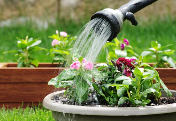 molhe plantas com regador