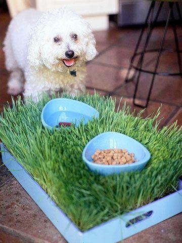 Como fazer uma bandeja de grama sintética