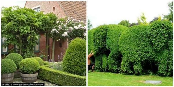 Grama Artificial Para Jardim