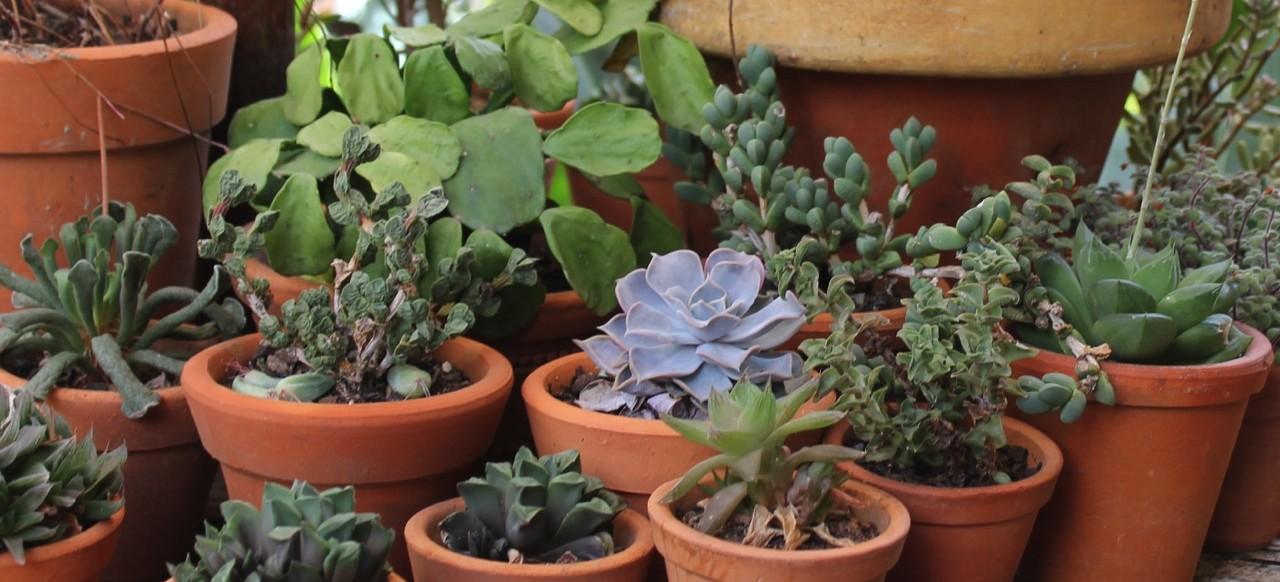 Jardim de Suculentas