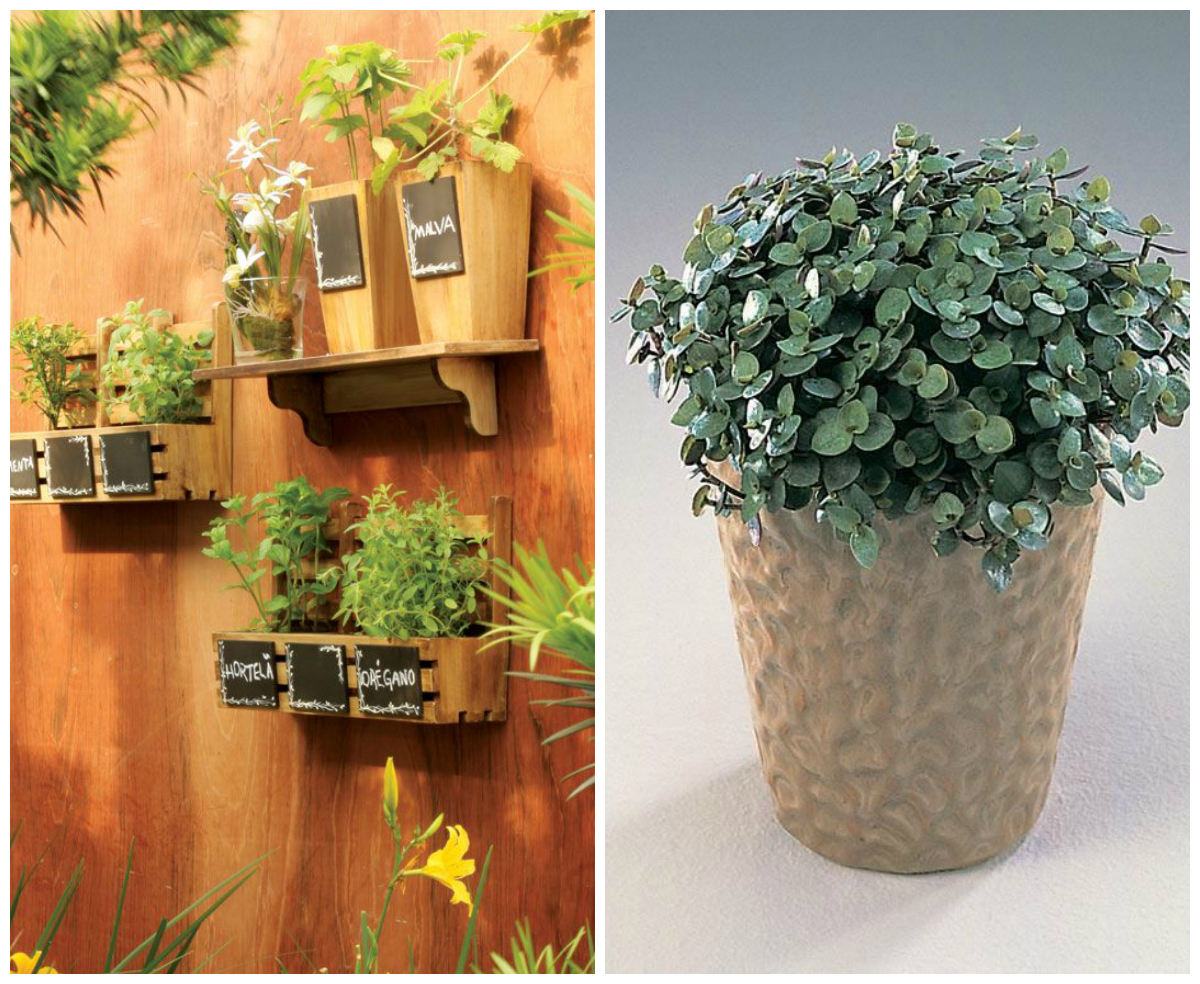 Plantas para jardins pequenos