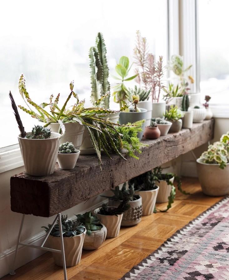 plantas em cima do banco no corredor