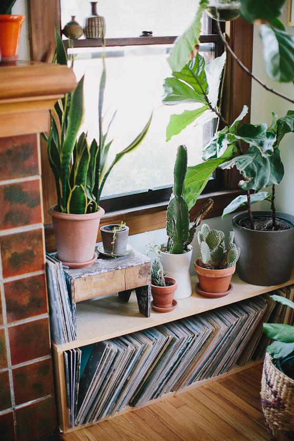 plantas no corredor de casa