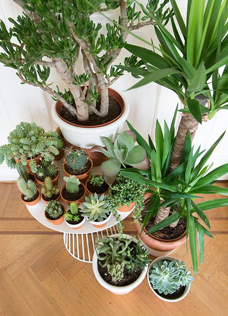 vasos e barro com plantas suculentas
