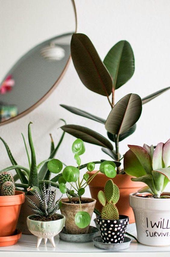 plantas suculentas em vasos de barro