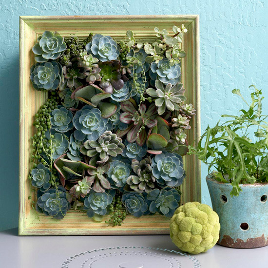 plantas suculentas expostas