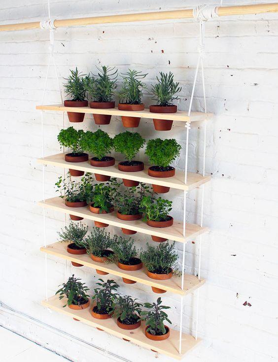 plantas expostas na estante