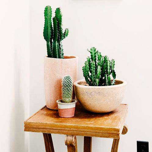três vasos de barro com plantas suculentas