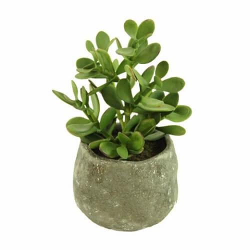 Bálsamo em um vaso para plantas