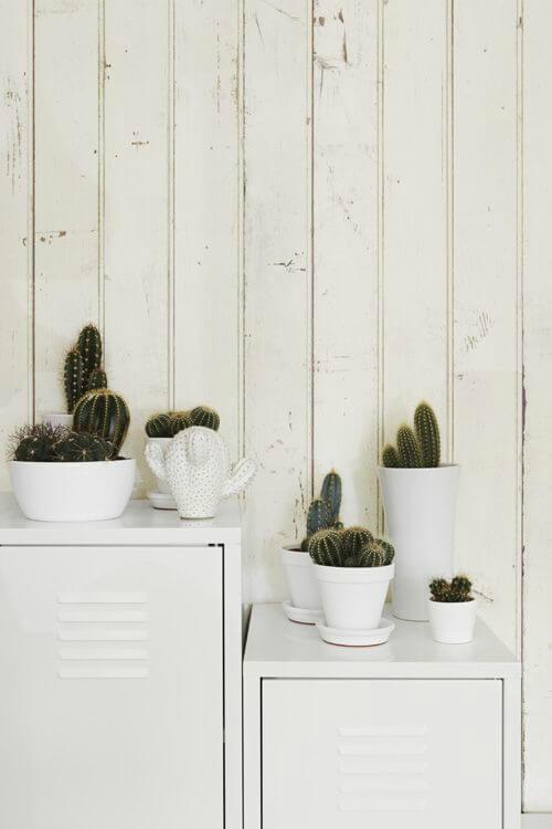 Cactus em armários