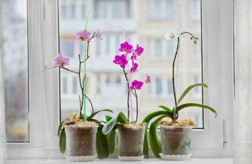 Orquídeas no parapeito de uma janela