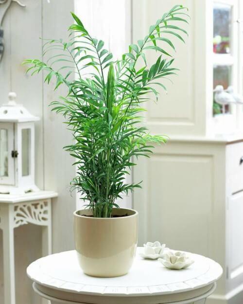 Camedórea-Elegante decorando o ambiente