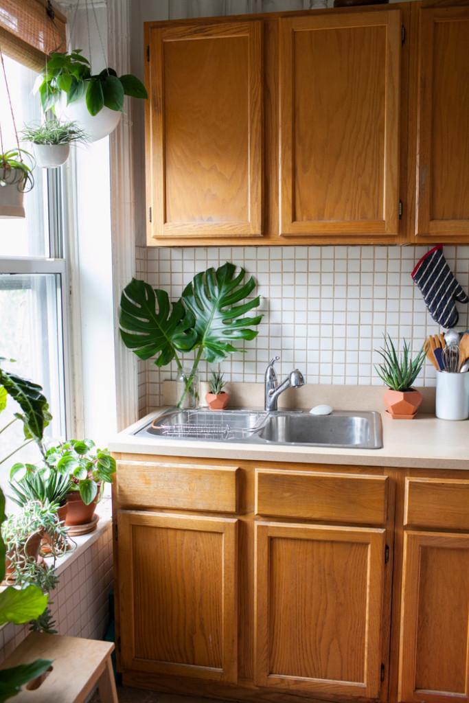 plantas pequenas no balcão da cozinha