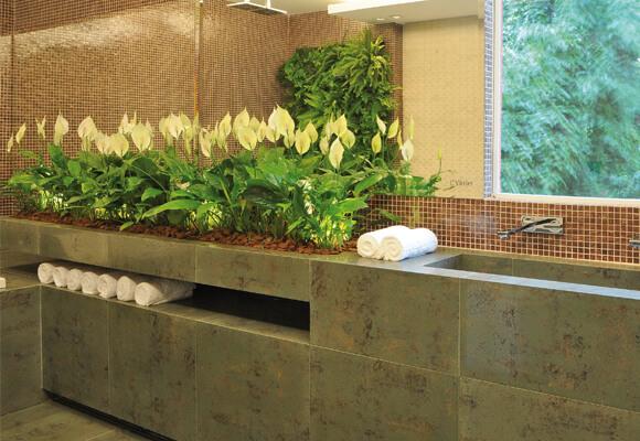 plantas na pia do banheiro