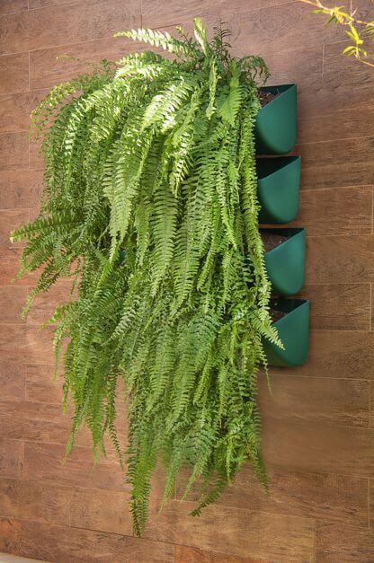 Planta Samambaia