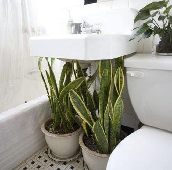 banheiro com espada de são jorge