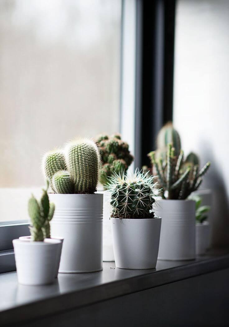 cactus para banheiro