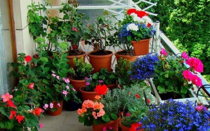 plantas coloridas no jardim da varanda