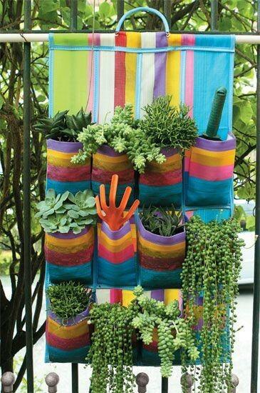 Sapateira servindo de suporte para plantas em jardim vertical