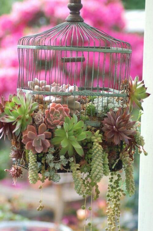 Gaiola com plantas