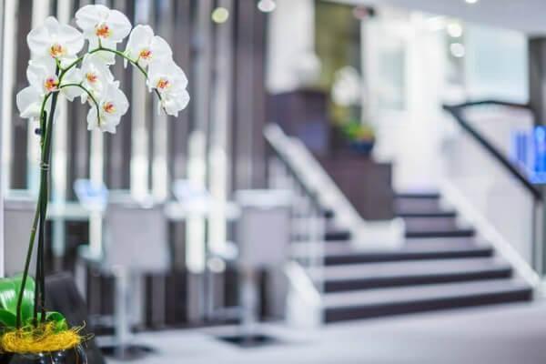 Orquídeas em ambiente interno