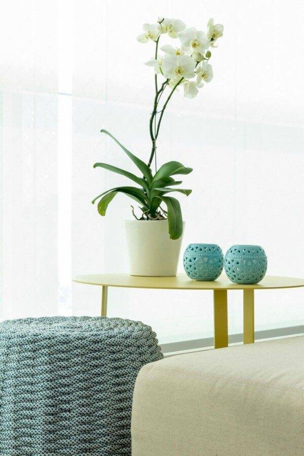 Vaso de flores com Orquídea