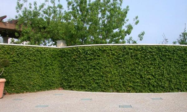 muro com trepadeira