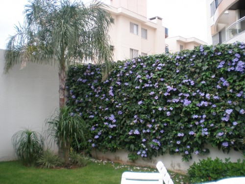 tubergias no muro