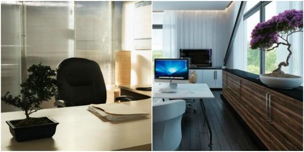 Colagem com fotos mostrando aplicação de bonsai em escritórios