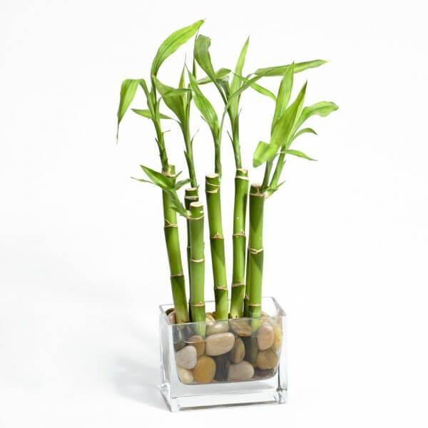 Vaso de vidro com bambu e pedras em seu fundo