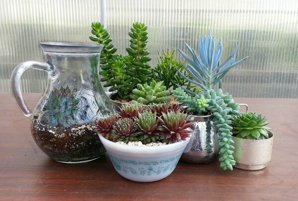 Plantas para sombra