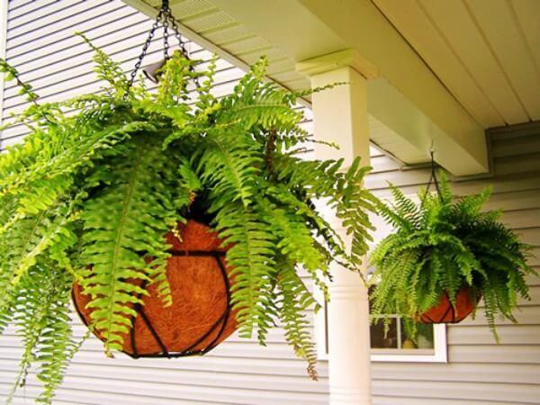 Dicas de como cuidar plantas de sombra