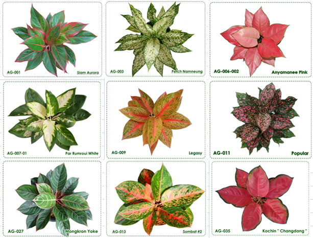 Tipos de plantas ideais para lugares fechados