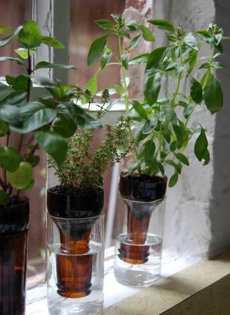 garrafas como vazo de planta