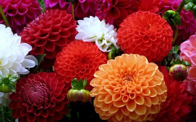 Flores para jardim externo