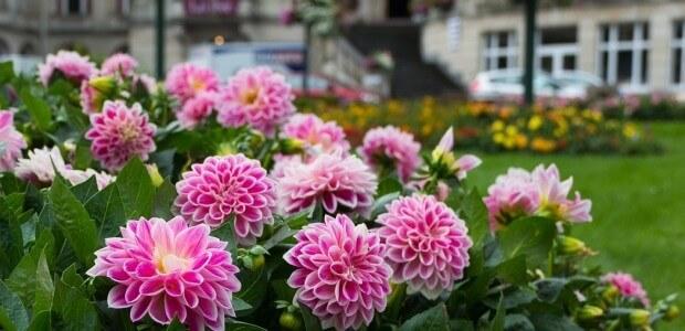 Melhores folhagens para jardim externo