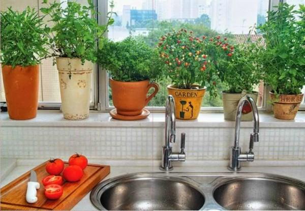 Plantas para vasos pequenos