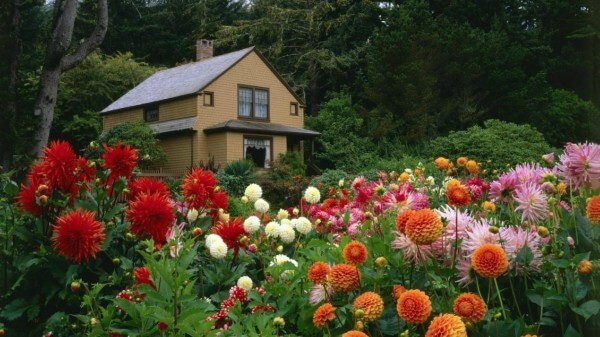 Jardim florido o ano inteiro
