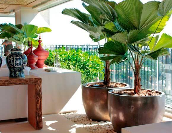 Plantas para vasos grandes