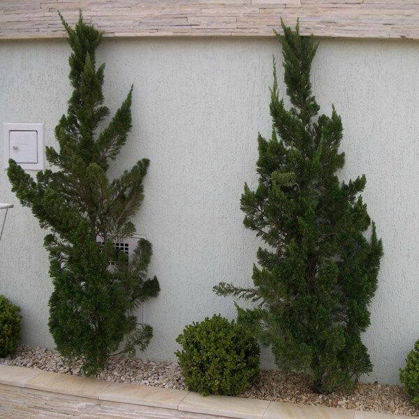 Árvores pequenas para jardim