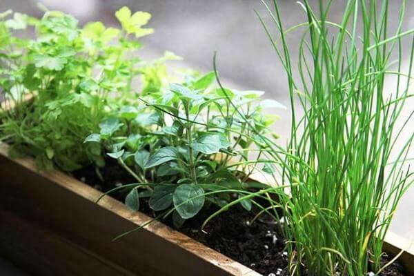 Como montar uma horta