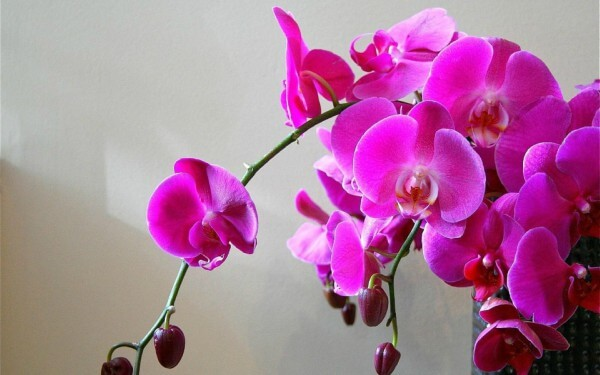 Como plantar orquíideas