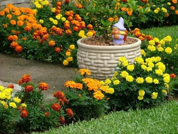 Plantas e flores para jardim barato