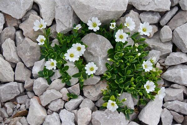 Dicas de jardins pequenos com pedras