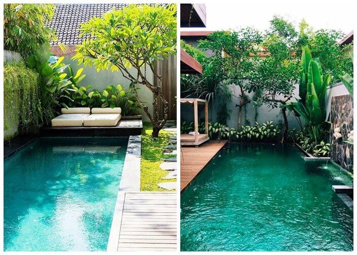 Plantas para climatizar piscina