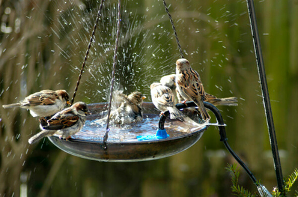 bebedouros de pássaros no jardim de inverno