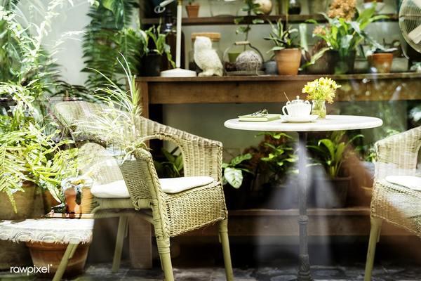 Plantas para jardim pequeno dentro de casa