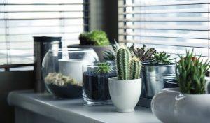 plantas suculentas não demandam muitos cuidados prolongados e nem ocupam tanto espaço